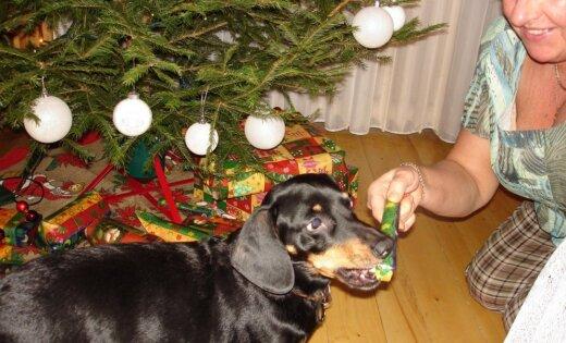Kā izmainās Ziemassvētki, kad ģimenei pievienojas suns?