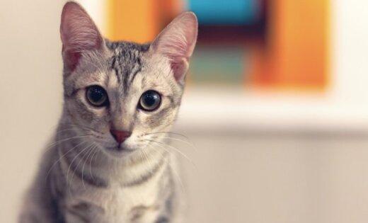 ВИДЕО: Вежливая кошка, которая стучит в дверь, стала сенсацией