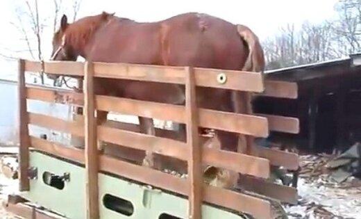 Izgudrots zāģis, ko darbina zirgs uz skrejceļa