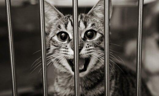 США: сын офицера полиции приговорен к 16 годам за серийное убийство кошек