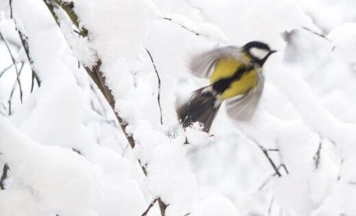Konkurss: Spilgtākie ziemas mirkļi