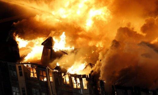 В США после пожара пропали два кота из Книги рекордов Гиннесса