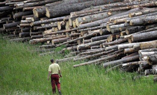 Latvijas kokrūpniekiem līdz šim bijis labs gads, apgalvo federācija