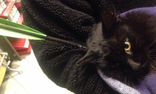 Кот вернулся домой, пробитый стрелой. Хозяева ищут виновных