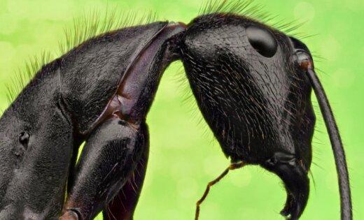 ASV cilvēki uzskata, ka gigabaits ir kukainis