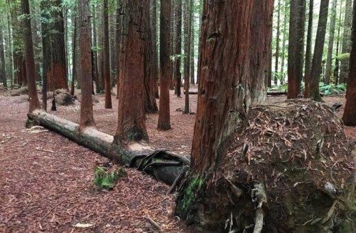 Приказано — выжить. 20 ФОТО крутых деревьев, которые просто так не сдадутся