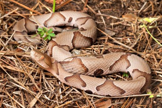 Все люди делятся на тех, кто видит на этом фото змею и тех, кто — нет. Ты чьих будешь?!