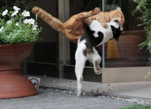 Minku tango...