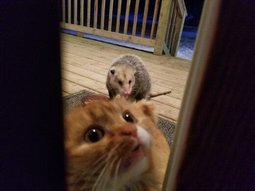 ФОТО с реакцией котика на крадущего его ужин опоссума смешит и трогает до слез