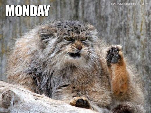 Ak, pirmdienas...