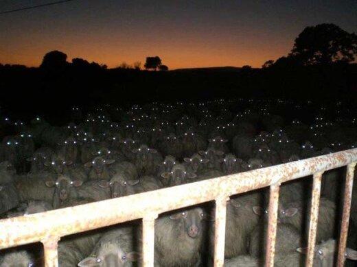 Naktī vari gulēt mierīgi...