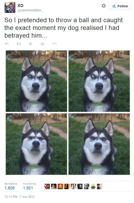 Suns, kurš zina, ko dari...