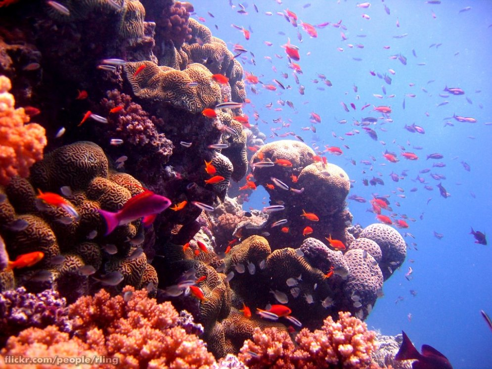 Люди доигрались: Большой Барьерный риф оказался под угрозой исчезновения