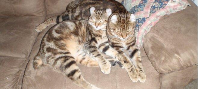К чему могут привести объятия с котами