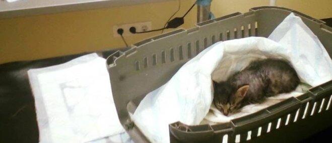 Lūdz palīdzību kaķēnam, kuru atrada parkā atstātā maisā