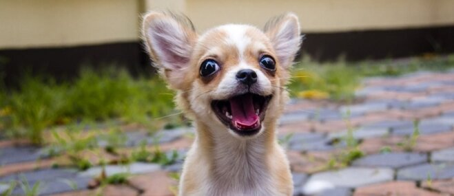 Mazi un viegli: septiņi sunīši, ko ērti satvert plaukstā