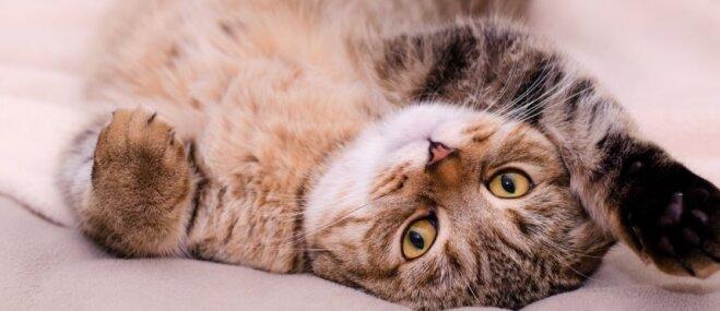 Trīs populāri jautājumi, kas nereti satrauc kaķu saimniekus