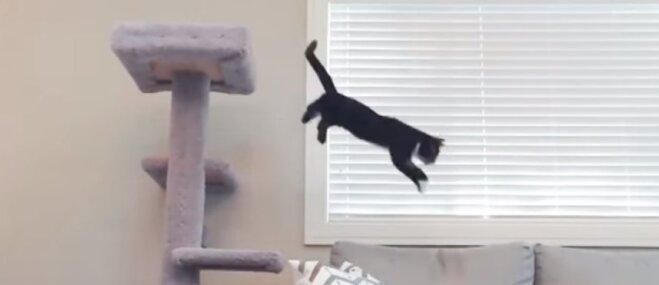 'Brīnumkaķis' Kesidijs bauda dzīvi, lēkādams kā trusītis