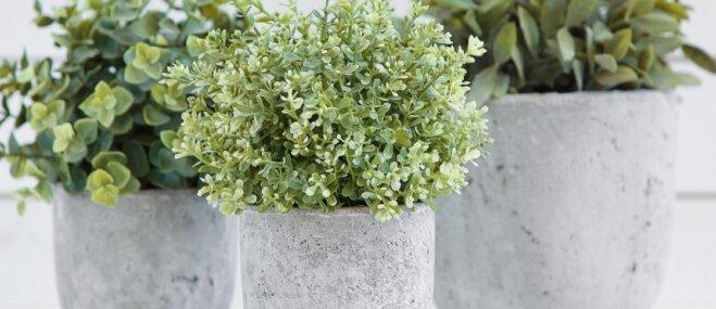 Interesantas idejas, ko var izveidot no betona maisījuma