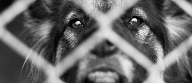 Jauks video: Patversmes suņuks priekā dejo un uzreiz tiek adoptēts