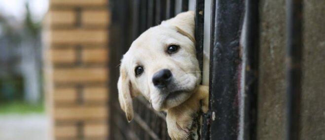 Neparastā izstādē aicina piedalīties tos suņus, kuri ir adoptēti no patversmēm