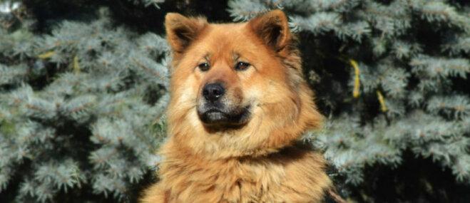 'Apzināti aizvesta un izmesta' – patversmes darbiniekus pārsteidz suņu dāmas Ellas stāsts