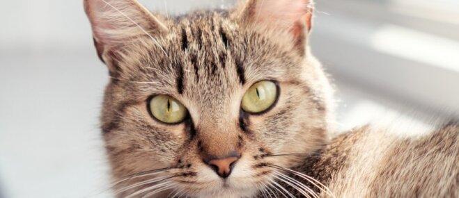 Jauns gads, jauna dzīve! Ikdienišķi kaķu paradumi, kurus vērts iemācīties arī cilvēkam