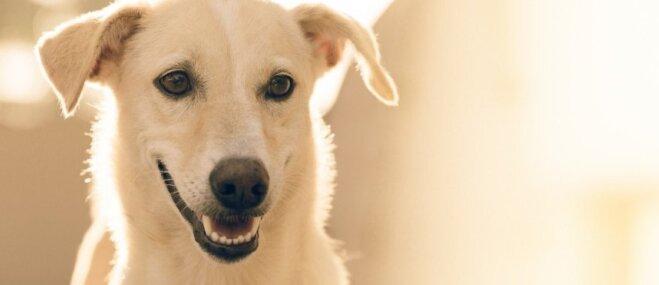Zinošs saimnieks – laimīgs suns! Padomi dažādām dzīves situācijām