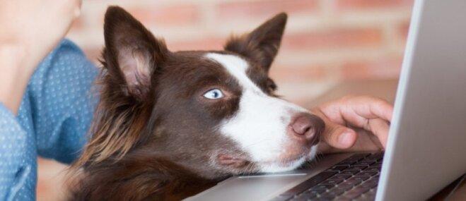 Atvieglojums suņu īpašniekiem – saimnieks savu čipēto mīluli varēs reģistrēt pats