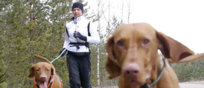 Sportošana kopā ar suni – vēlama vai bīstama