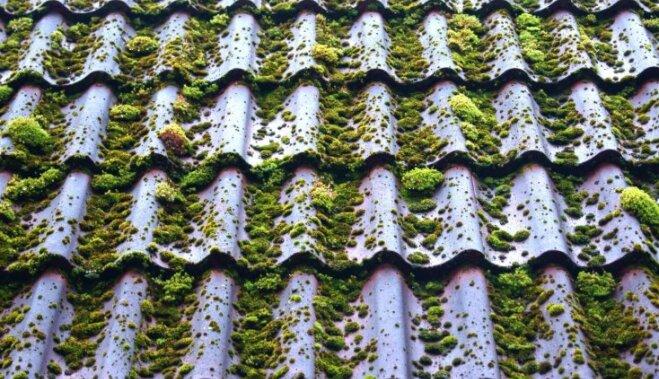 Sūnas uz jumta – kā no tām atbrīvoties