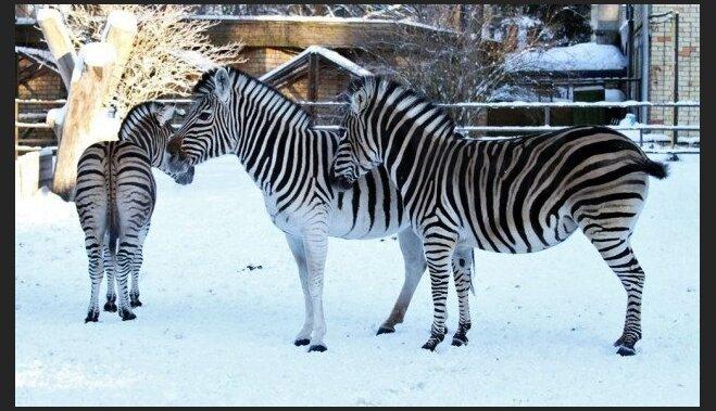 Они не спят: 5 причин посетить Рижский зоопарк зимой
