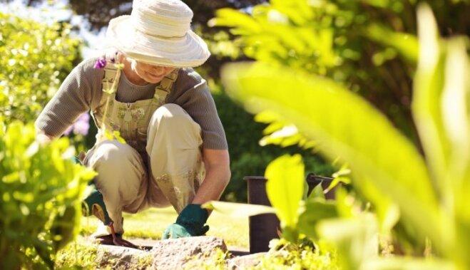 Как бороться с вредителями в саду – тлей, долгоносиками, бабочками и улитками?