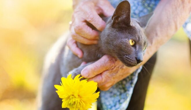 15 шокирующих фактов о кошачьем поведении