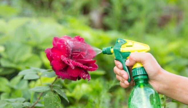 Как вырастить семена цветов на рассаду в домашних условиях
