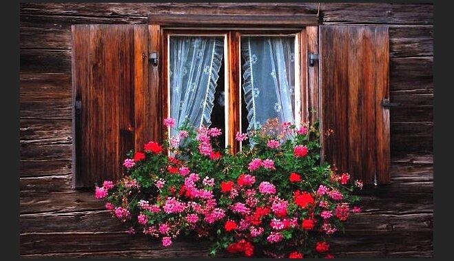 Неприхотливые комнатные цветы, цветущие круглый год