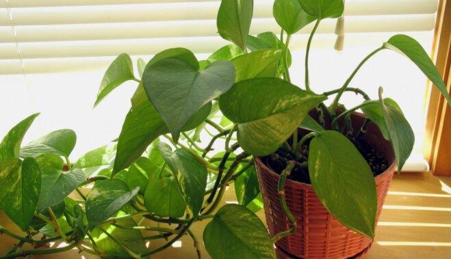 Комнатные растения: скромное обаяние и гигантская польза