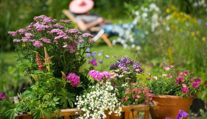 10 цветов, которые расцветут в любом саду