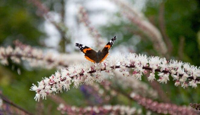 7 жестоких способов заставить сад плодоносить