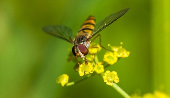 Эти противные насекомые. Народные методы борьбы с комарами, мухами и осами