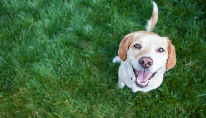 Второй нос, улыбка и полное отсутствие чувства вины. 11 фактов о собаках