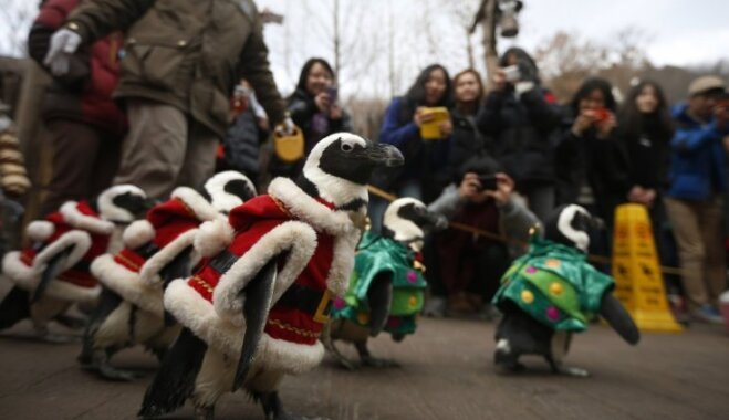 Foto: Par Ziemassvētku vecīšiem pārģērbti pingvīni dodas parādē Dienvidkorejā