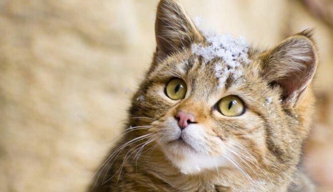 Ticēt vai neticēt: kā dzīvnieki var pareģot laikapstākļus
