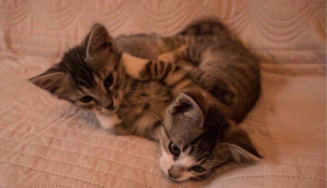 Lieli un mazi kaķubērni meklē mīlošus saimniekus