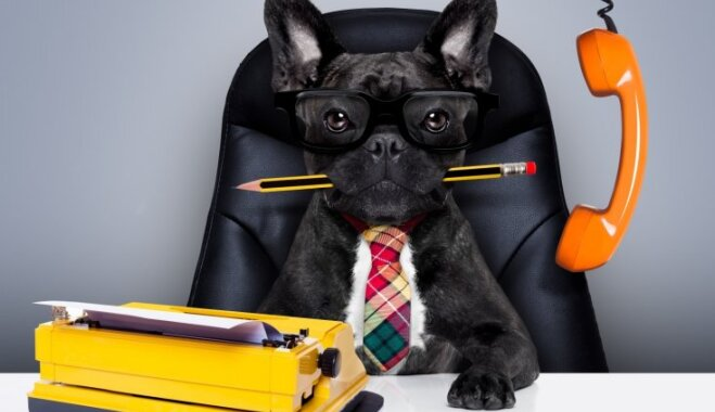 10 profesijas, kurās suņi ir labāki nekā cilvēki