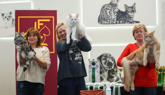 Milzīgie meinkūni Feimuss un Gousts – skatītāju mīluļi starptautiskajā izstādē Rīgā