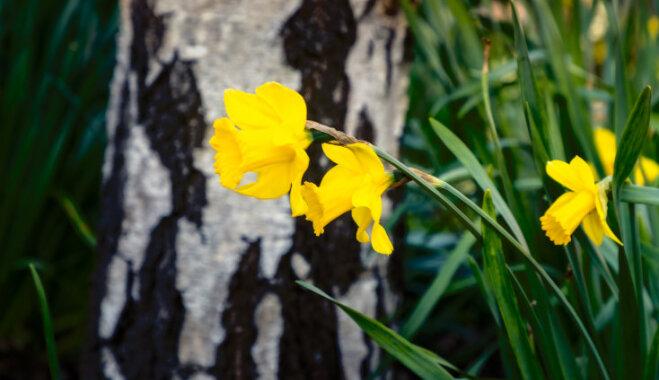 Встали на сторону тьмы: 9 растений, которым лучше всего в тени большого дерева