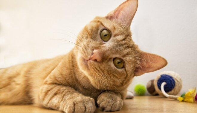 Правила жизни котов: чему стоит поучиться у наших питомцев