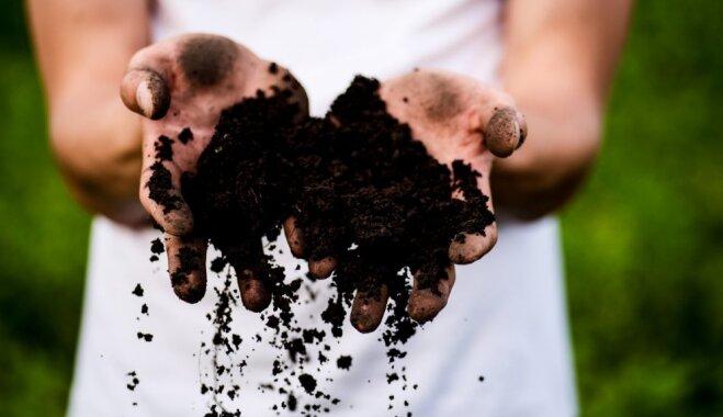 Palutini dārzu veselīgi: augsnes uzlabošanas līdzekļu salīdzinājums