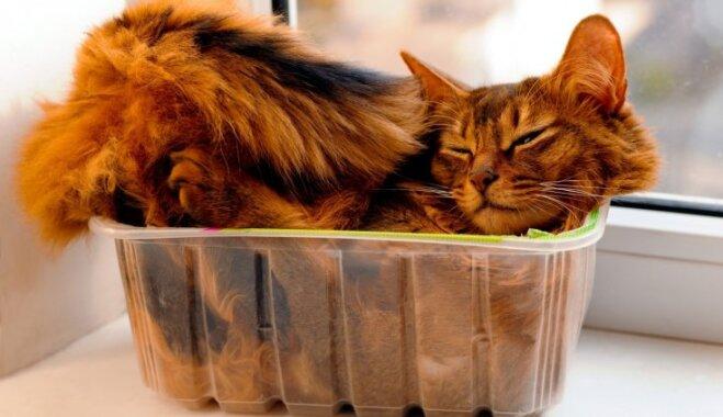Готовим дом и квартиру к домашнему животному — 7 советов